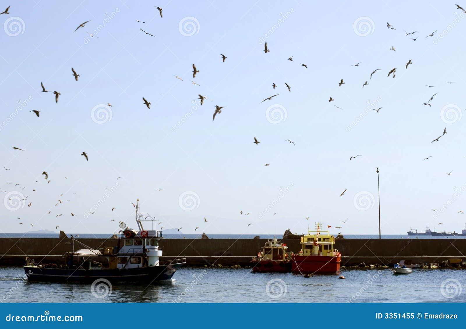 Gaivotas que voam sobre o porto