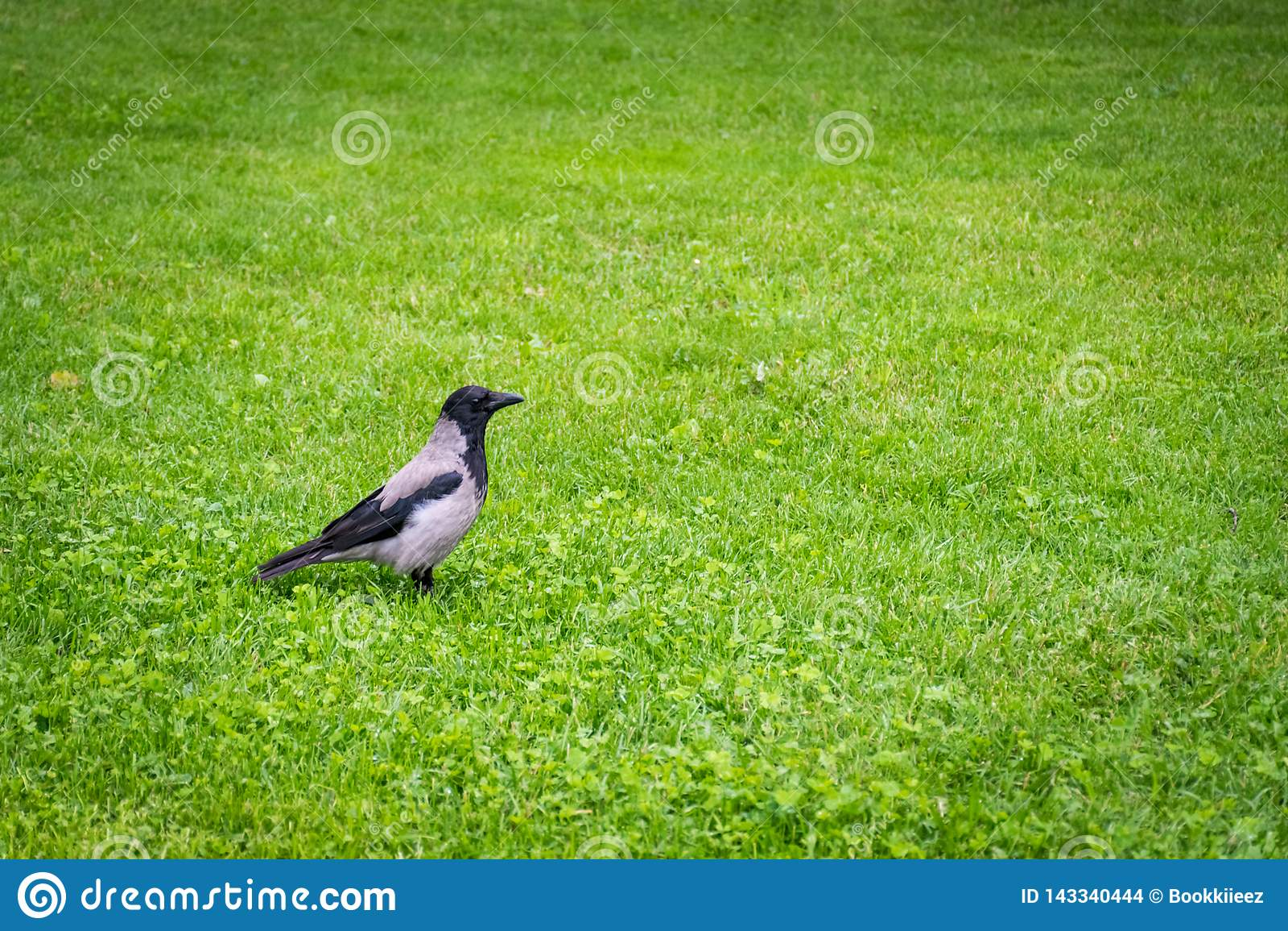 Galandet står i gräsgården
