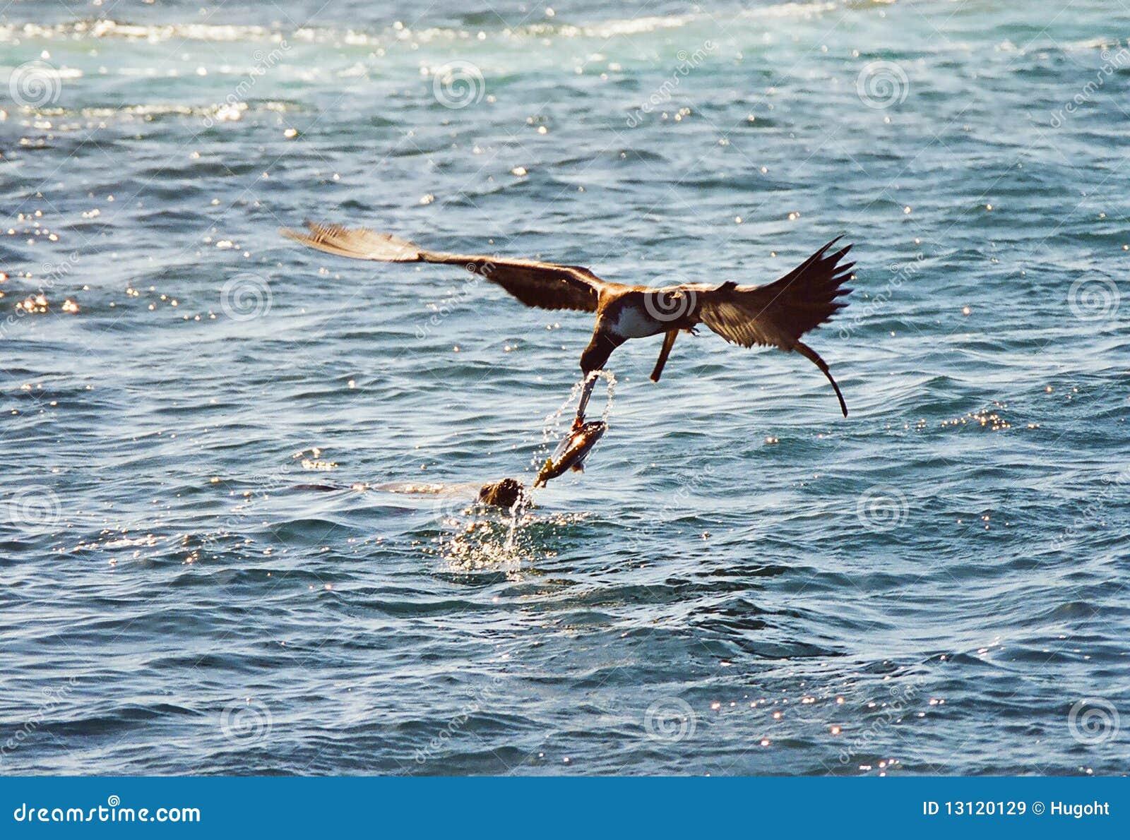 Galapagos animals fighting