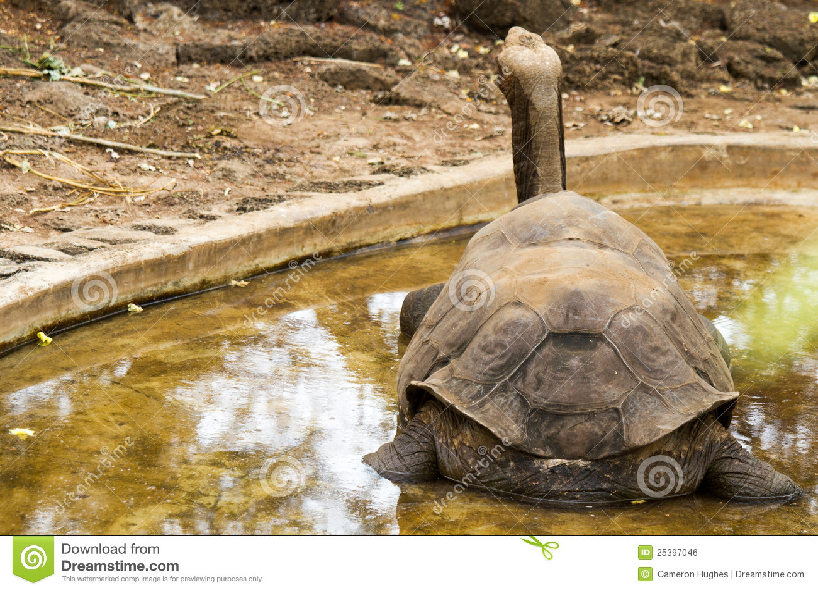 Galapagos george ensam sköldpadda