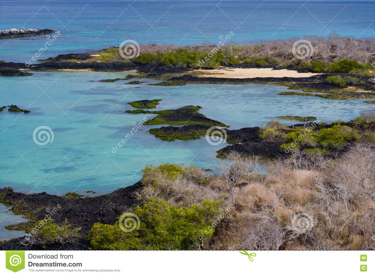 the galapagos island in ecuador essay The galapagos islands essay custom student mr teacher eng 1001-04 3 february 2017 the galapagos islands the galapagos islands were first inscribed as a world heritage site in danger in.