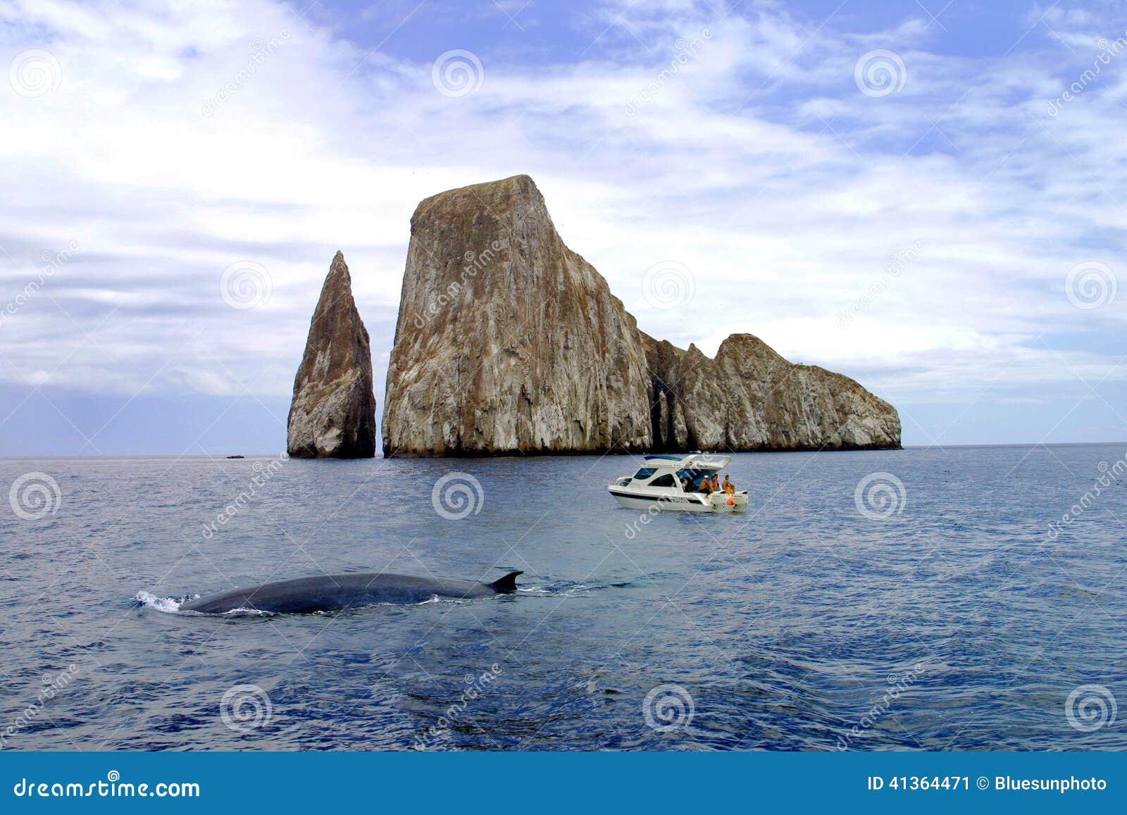 Galapagos Wielorybi dopatrywanie