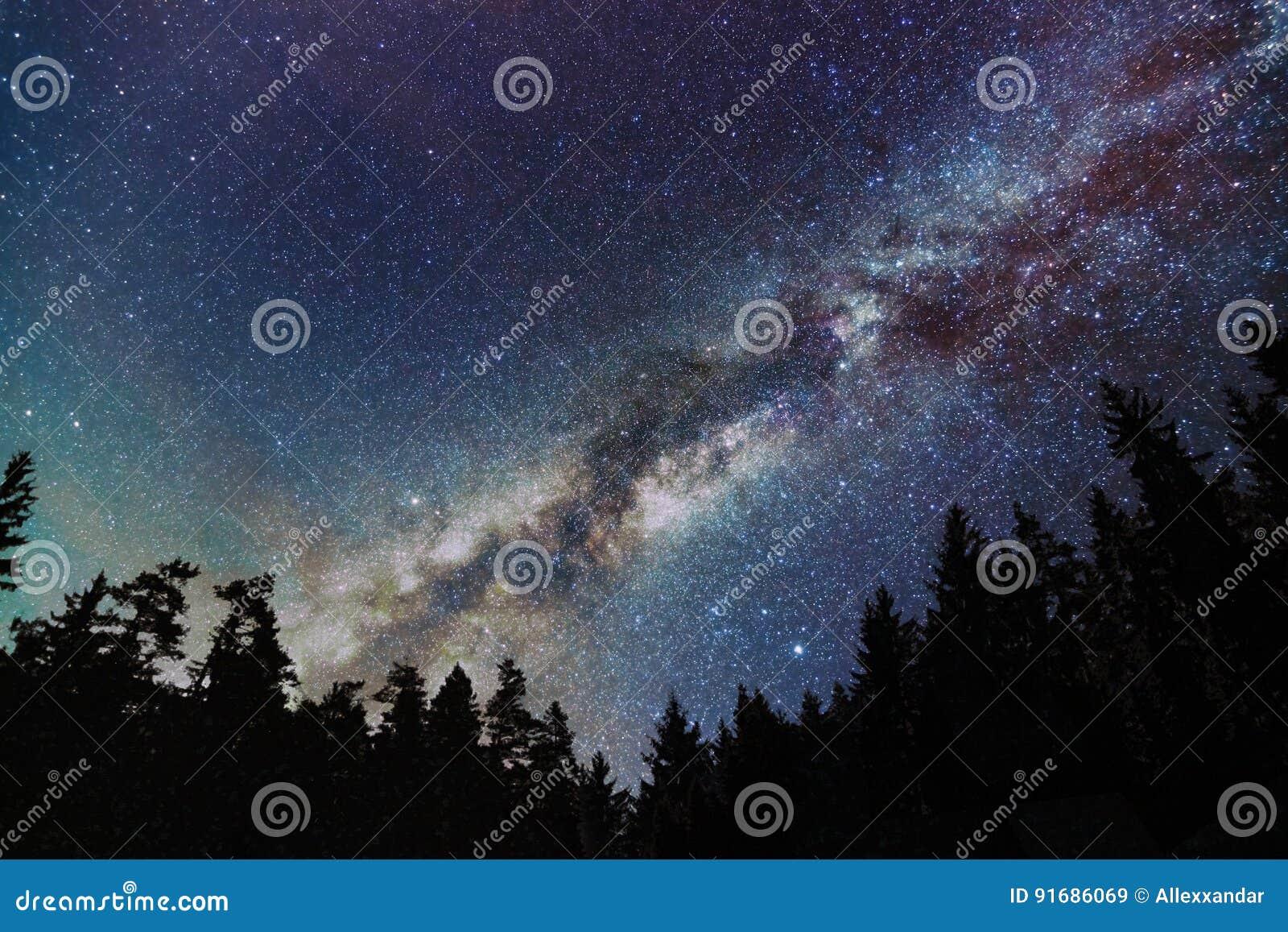 Galassia della Via Lattea, cielo stellato con gli alberi Notte stellata