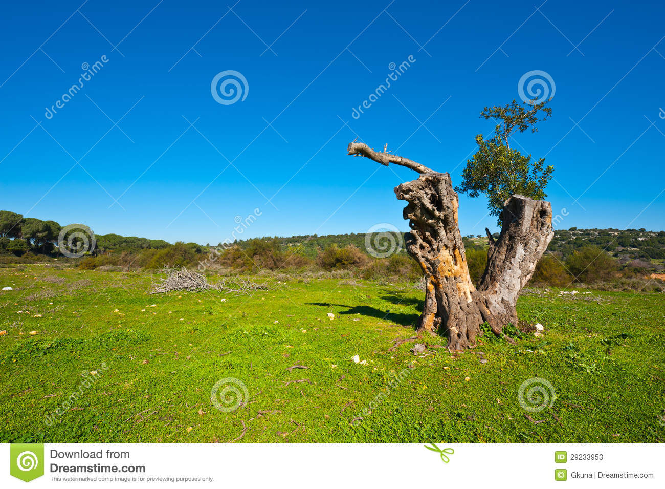 Download Galilee imagem de stock. Imagem de flora, ecology, renewable - 29233953