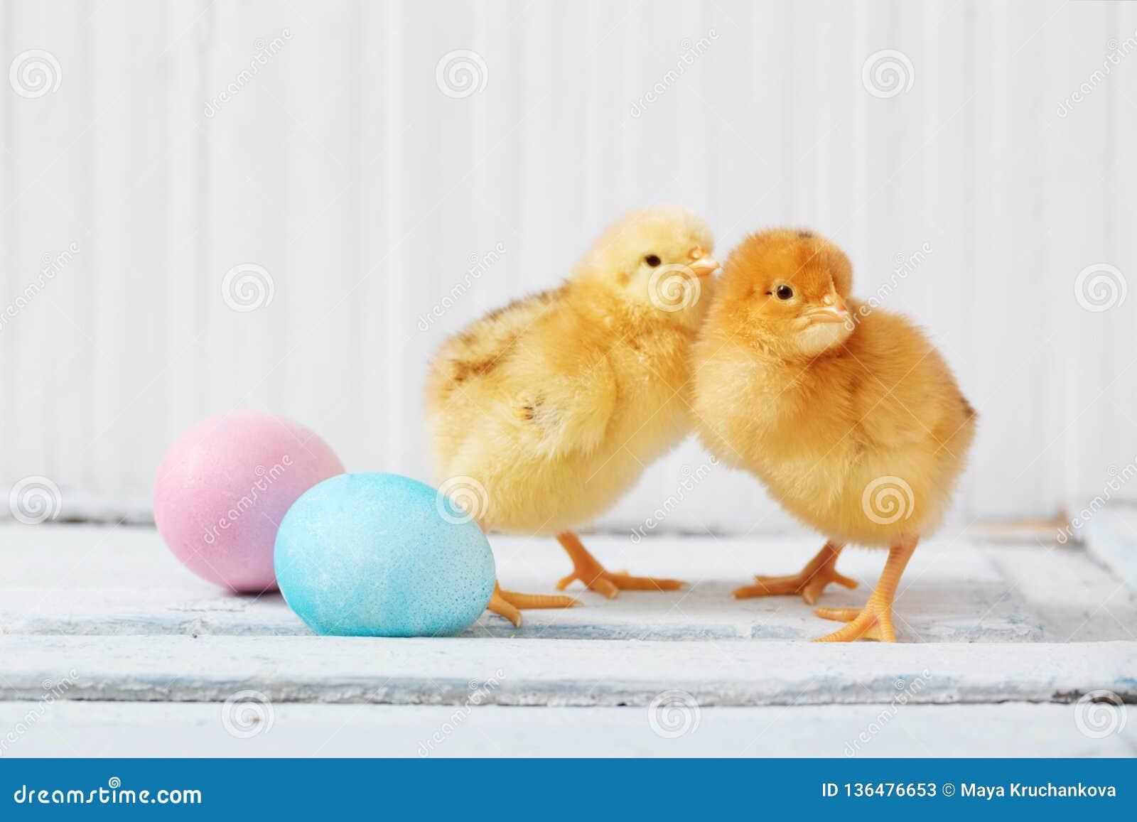 Galinha e ovo da páscoa no fundo de madeira