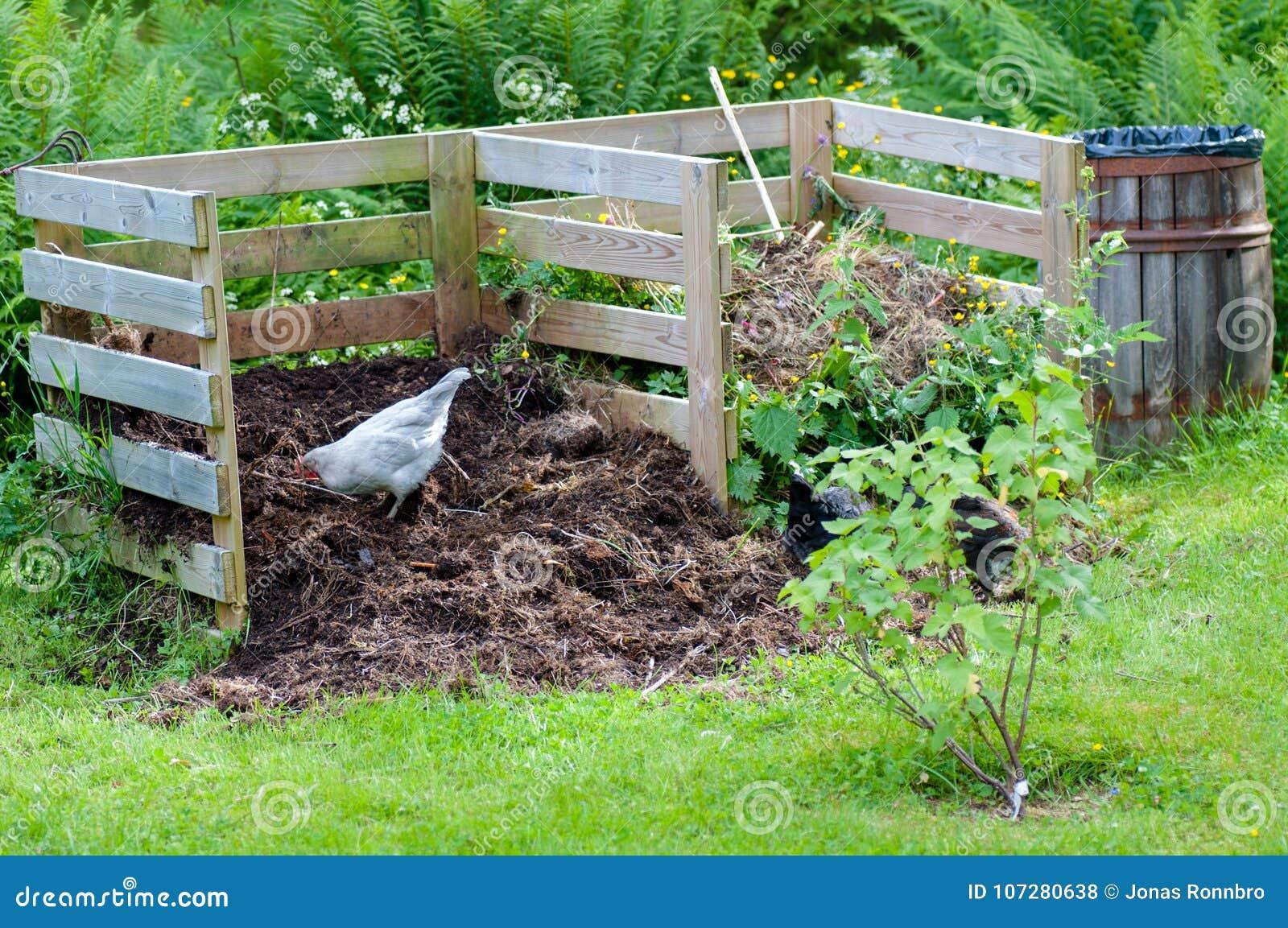 Galinhas que trabalham no adubo do jardim
