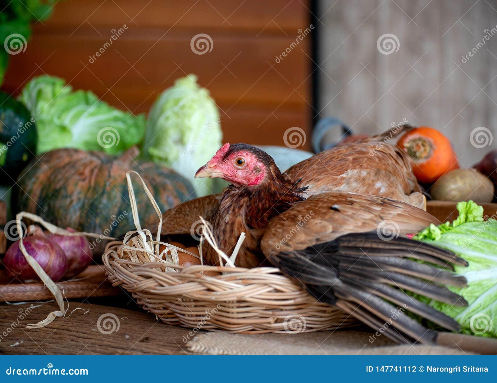 Gallina en cesta con los huevos entre los diversos tipos de verdura en la tabla en la cocina