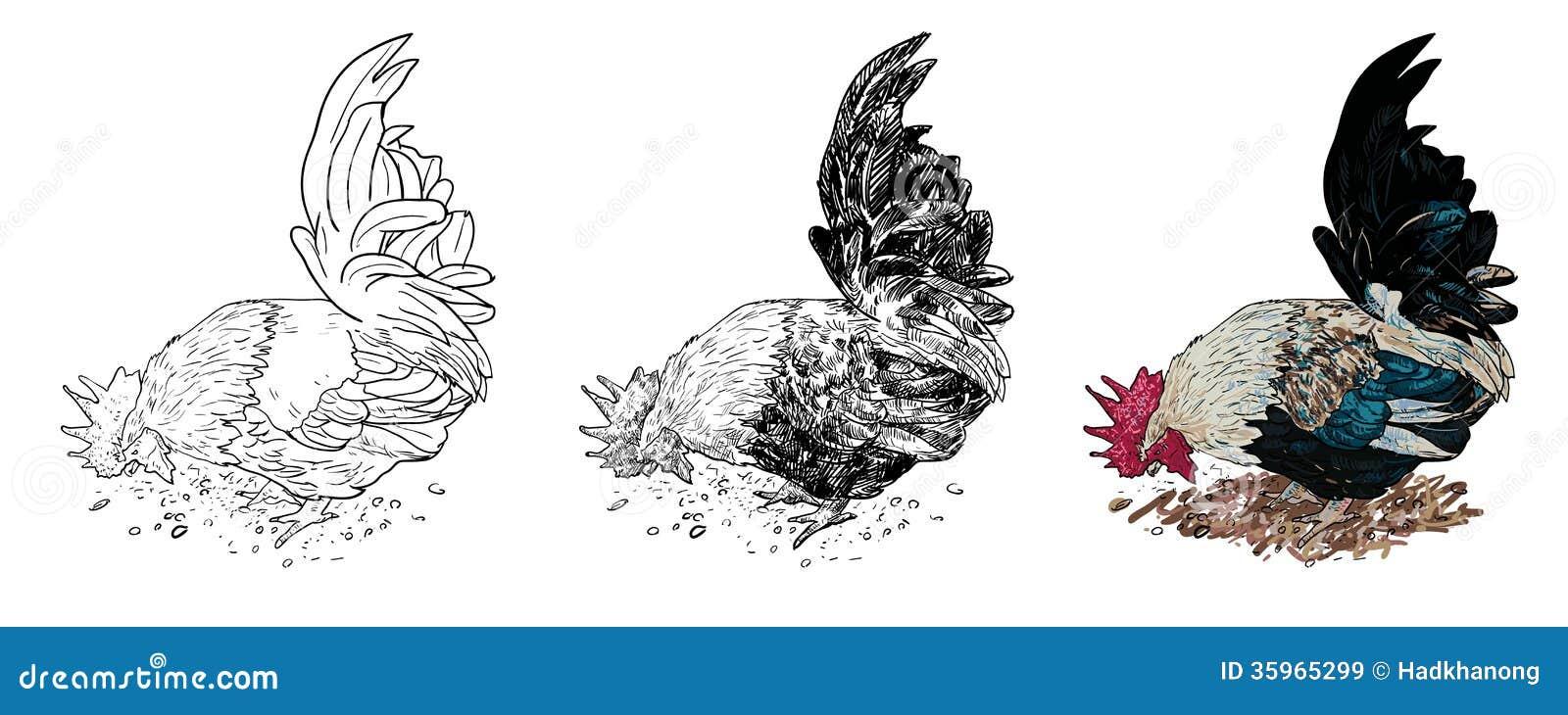 Gallo masculino, una clase de pollo