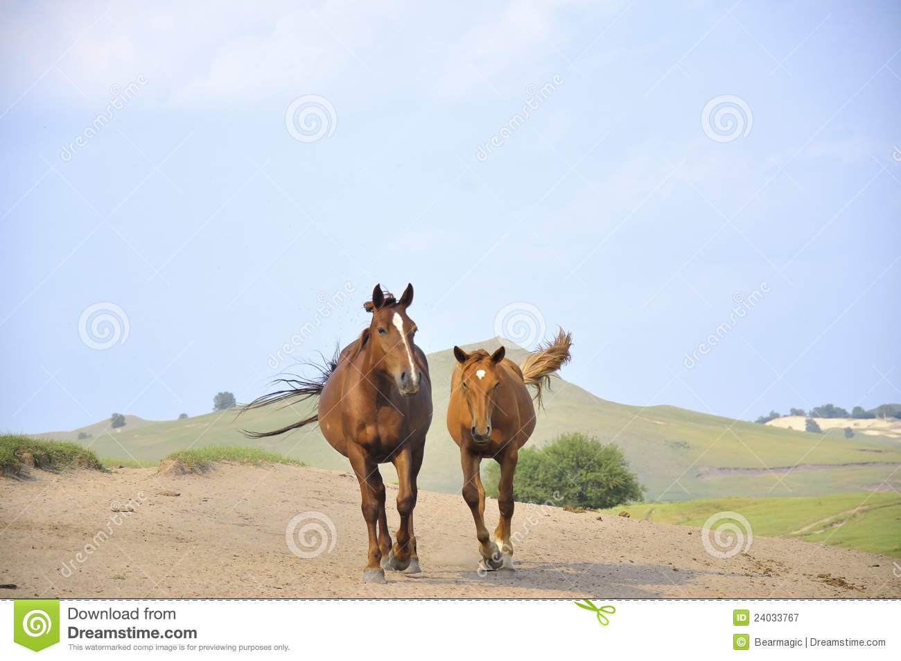 Galloping Horses Royalty Free Stock Photography - Image: 24033767