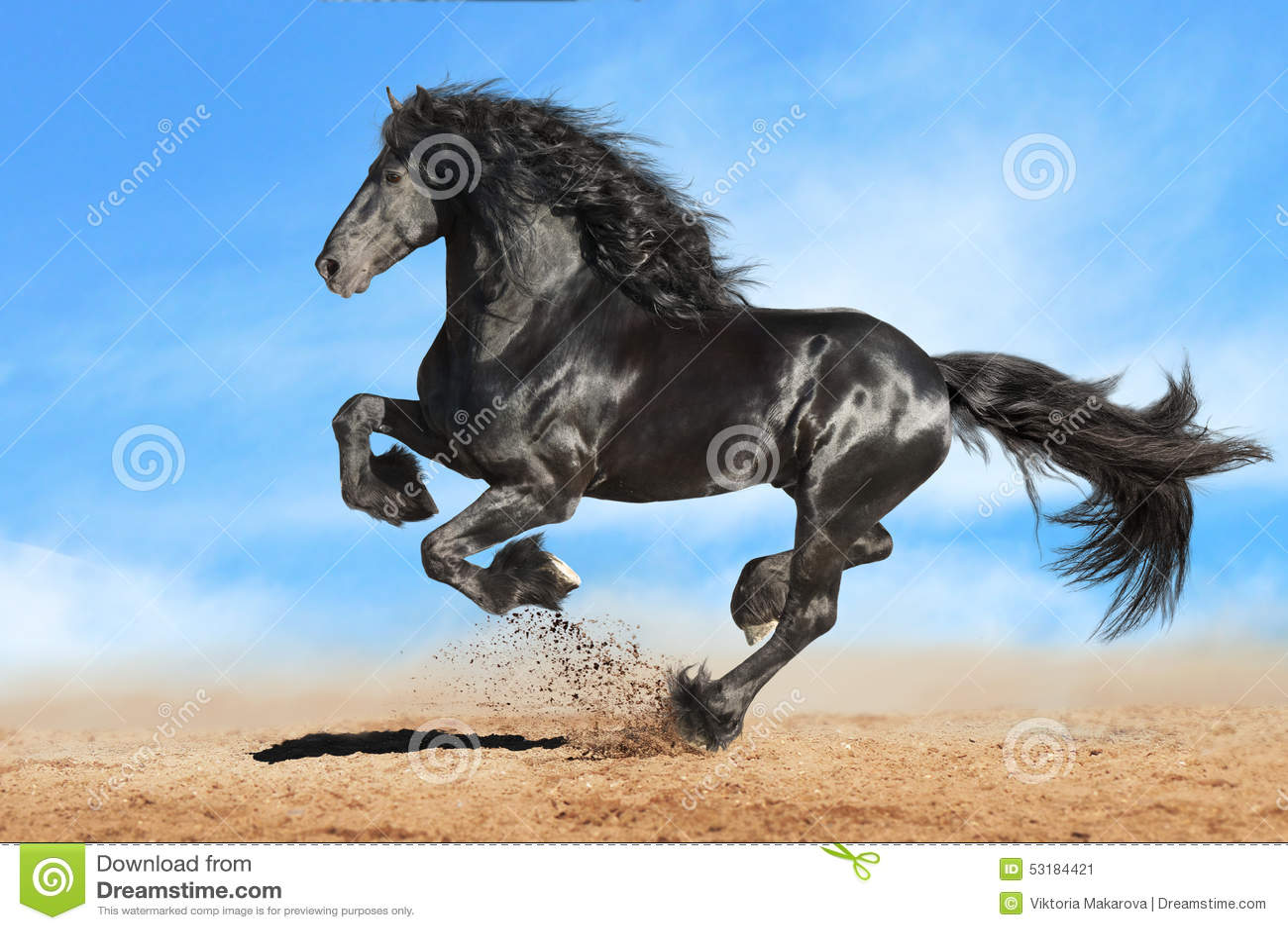 Galop frison noir de courses de cheval