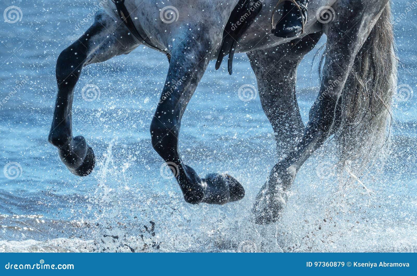 Galope cinzento da corrida do cavalo na água Pés do fim do cavalo acima