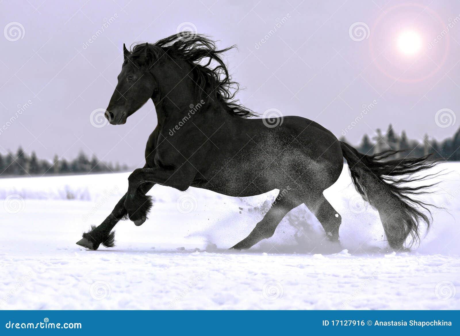Galope frisio del caballo en invierno