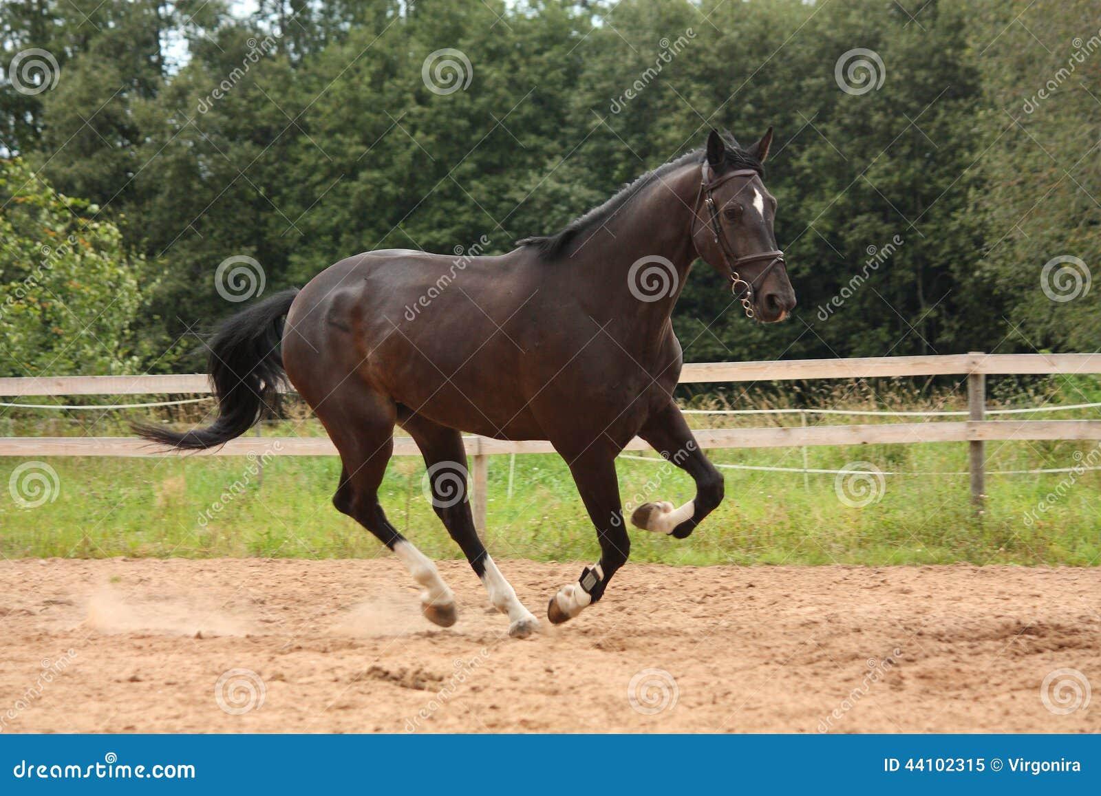 galoper noir de cheval gratuit au champ photo libre de droits