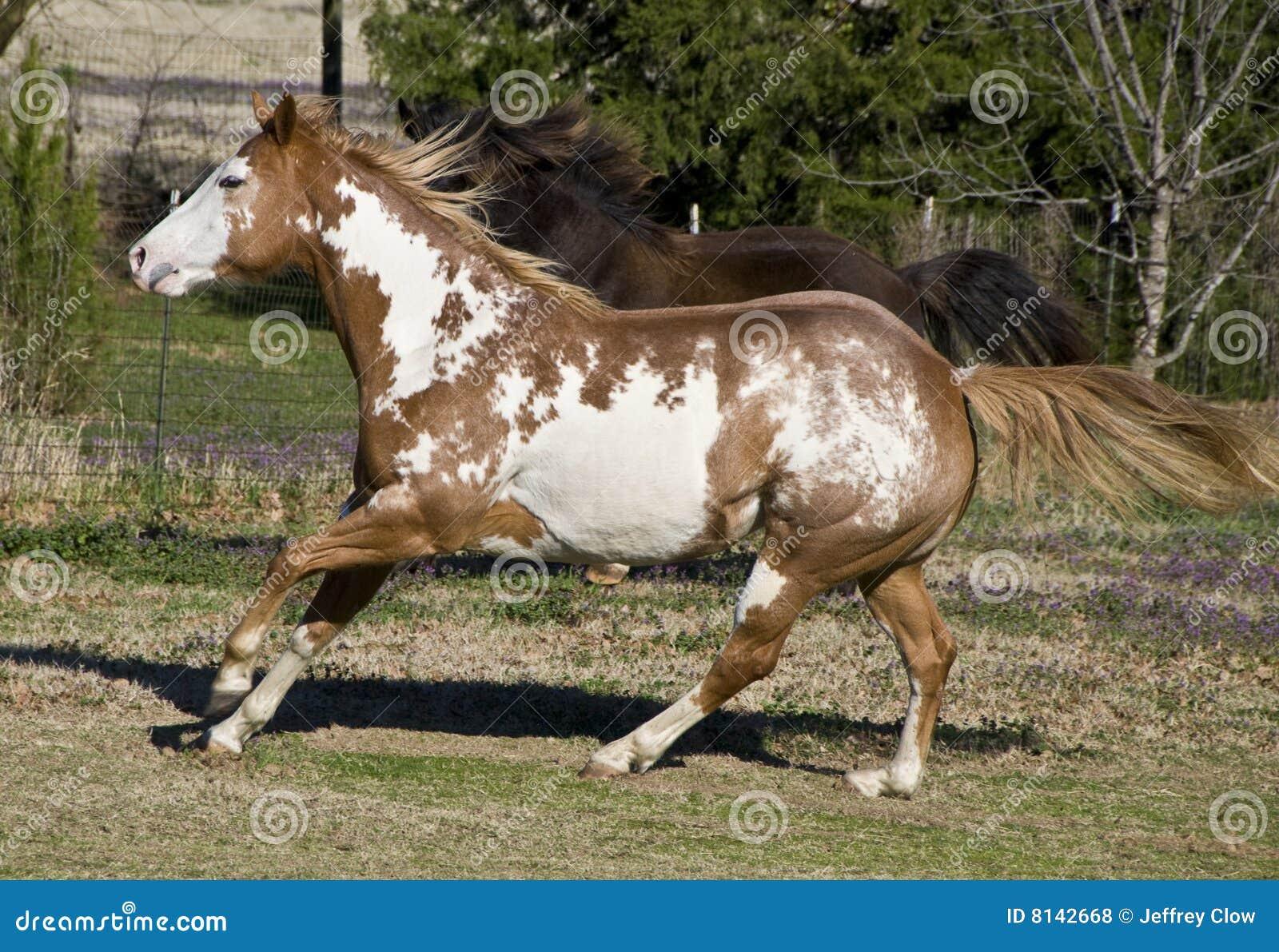 galoppierende pferde lizenzfreie stockfotos bild 8142668. Black Bedroom Furniture Sets. Home Design Ideas