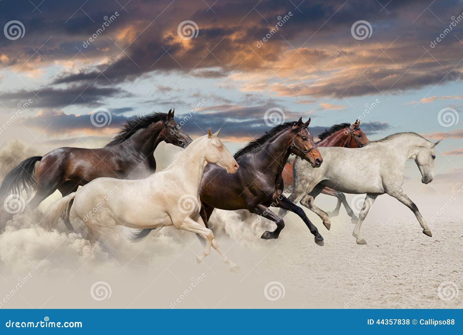 Galoppo di funzionamento di cinque cavalli
