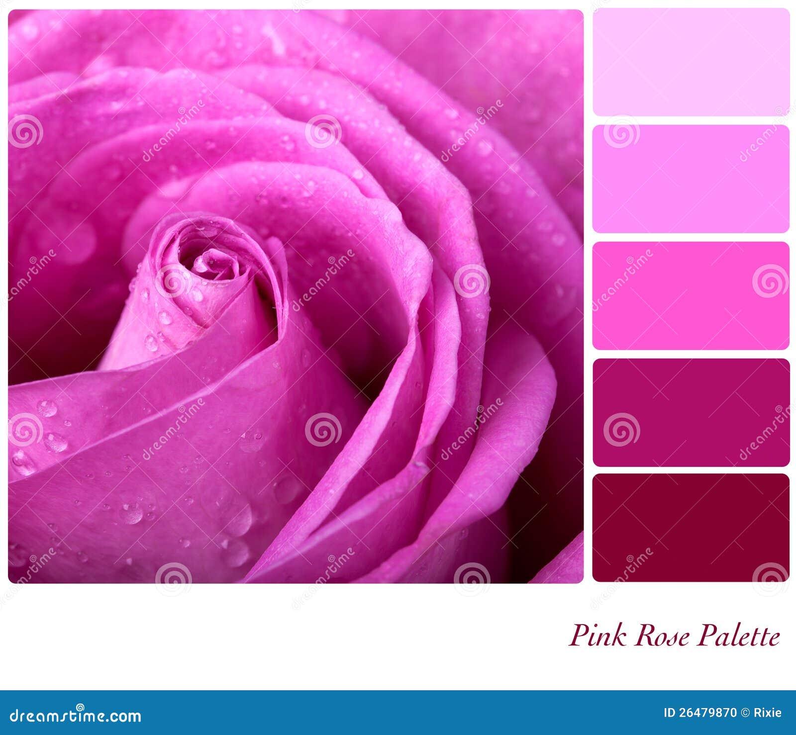 Gama de colores rosada de rose foto de archivo imagen - Gama de colores rosas ...
