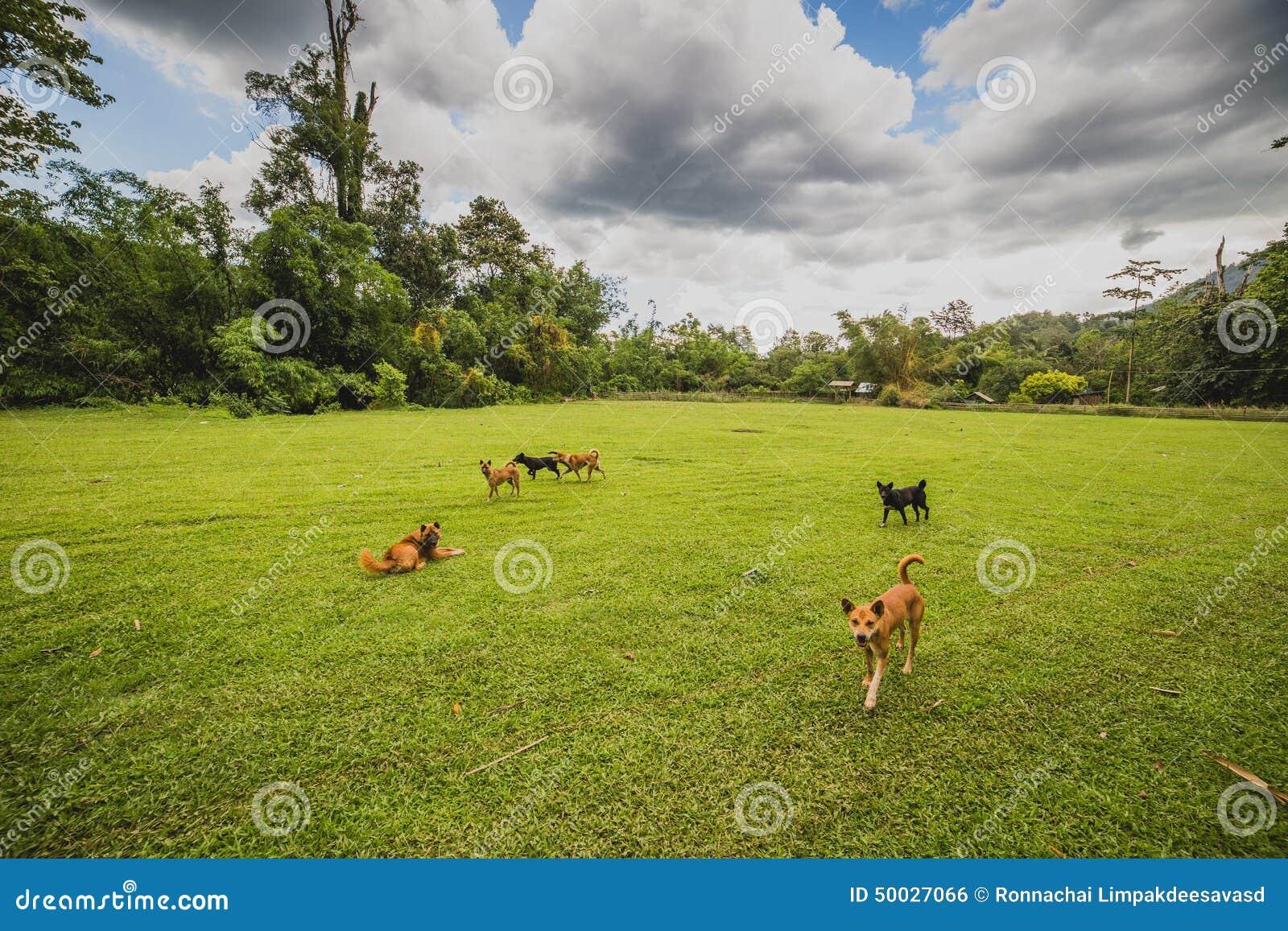Gambades de chiens dans la cour