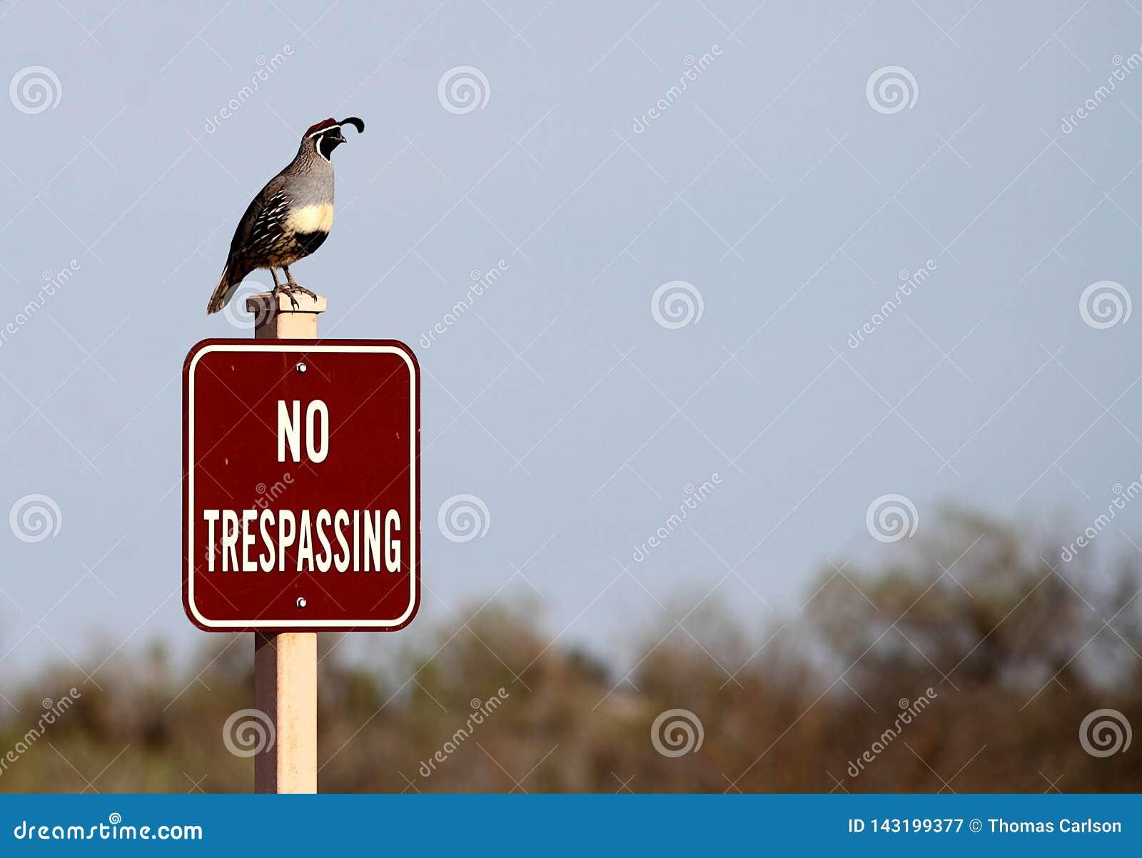 Gambel przepiórki pozycja na żadny trespassing znaku
