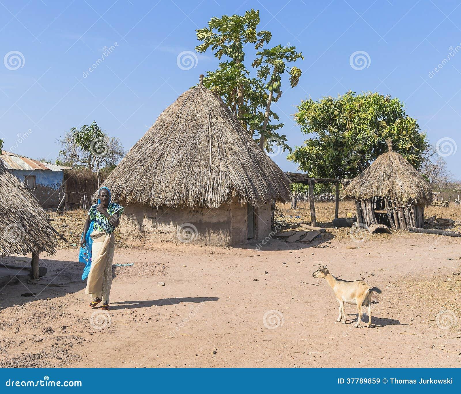 Gambian village editorial stock image. Image of ...  Gambian village...