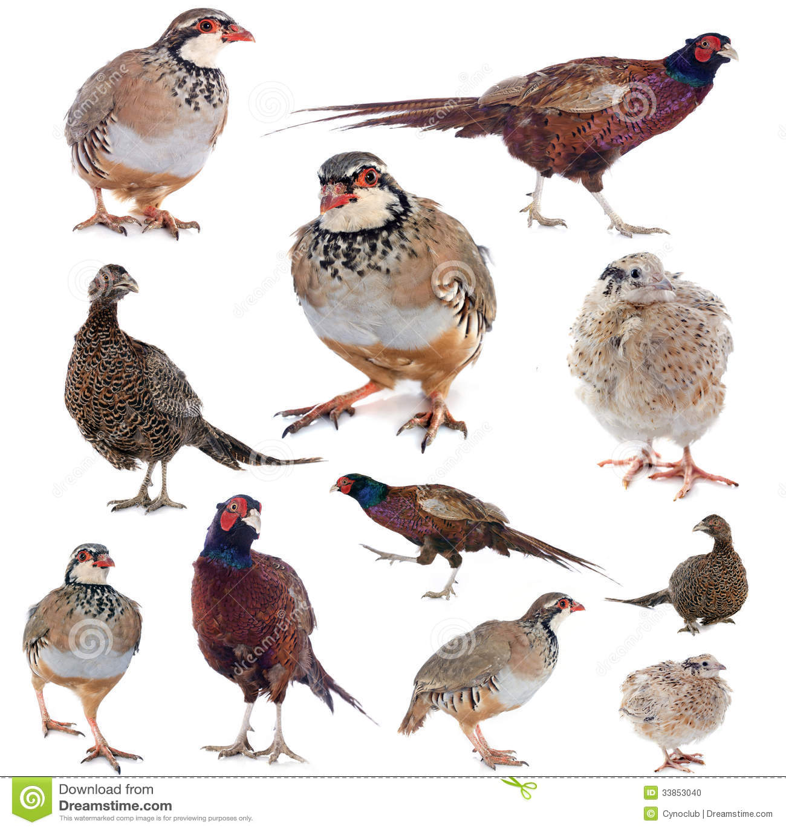 Game Birds Stock Photo  Image: 33853040