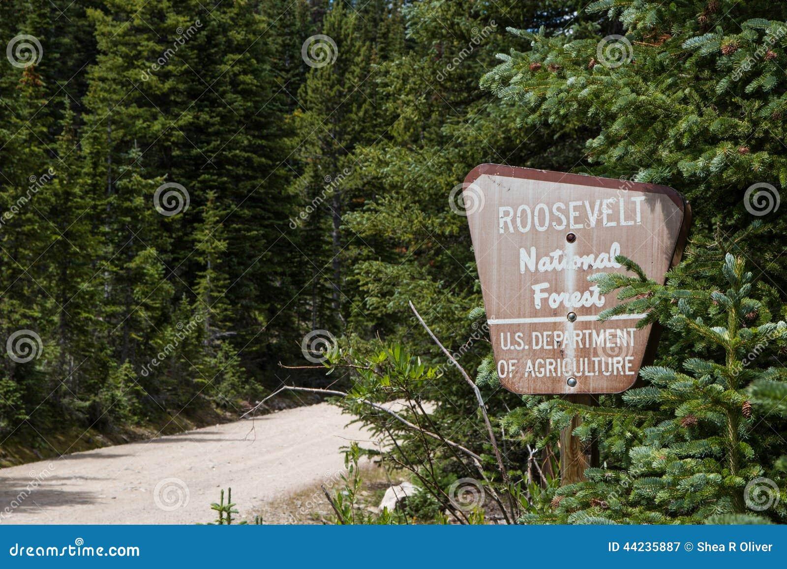 Gamla Roosevelt National Forest Sign