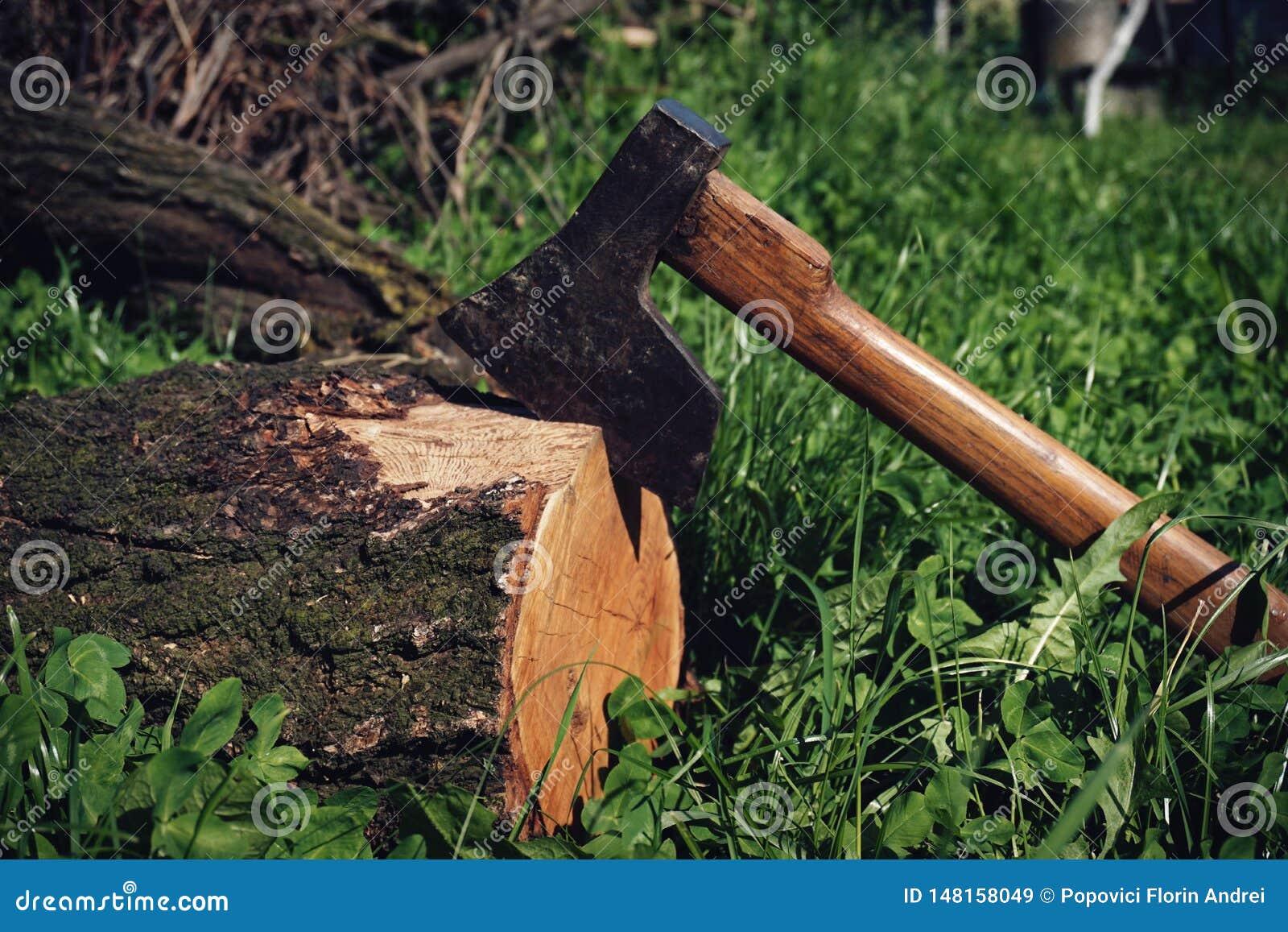 Gamla Rusty Ax i ett klippt träd