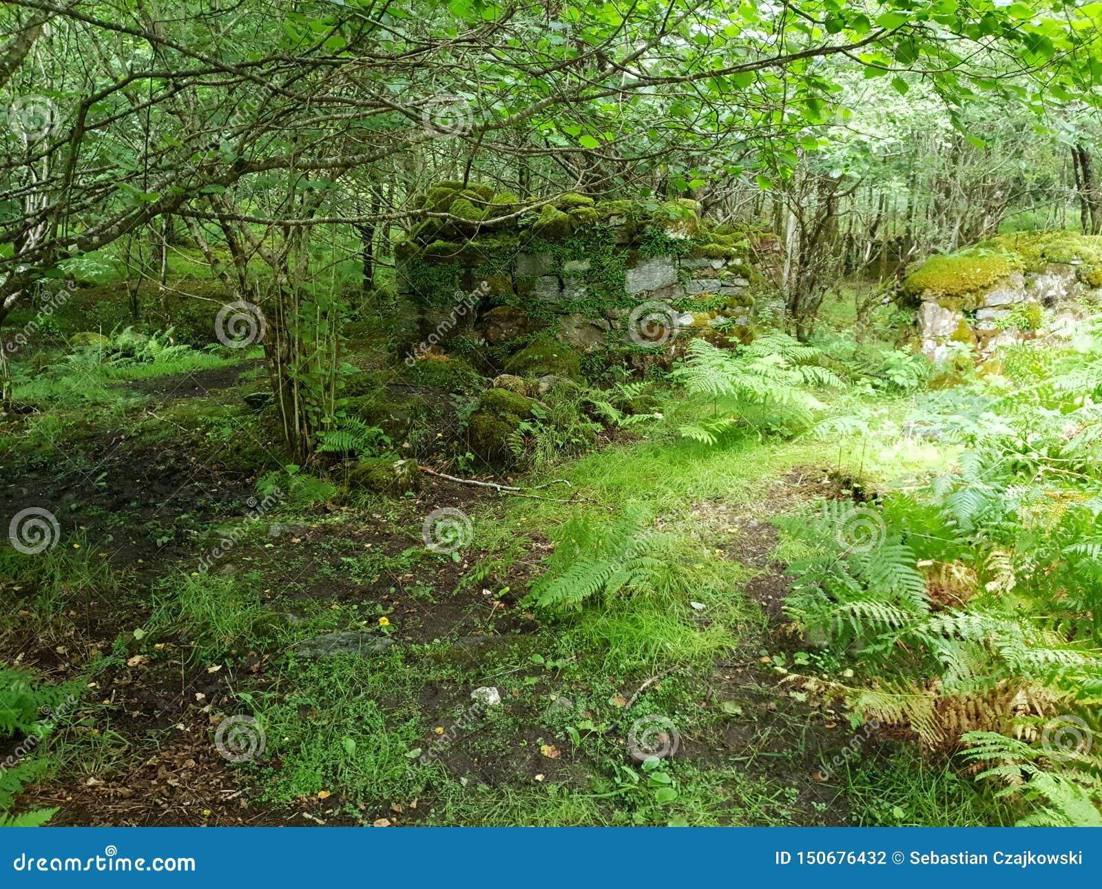Gammal bulding montering för skog, natur