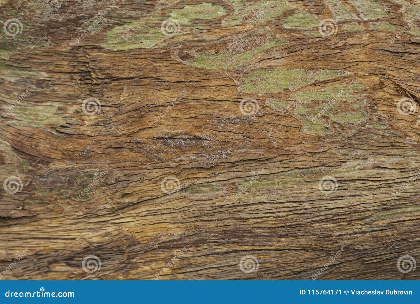 Gammal grungy träyttersidatextur Varmt brunt foto för timmertexturmakro naturligt trä för bakgrund