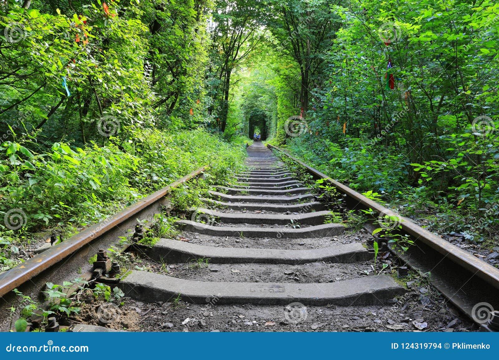 Gammal järnväg i grön skog