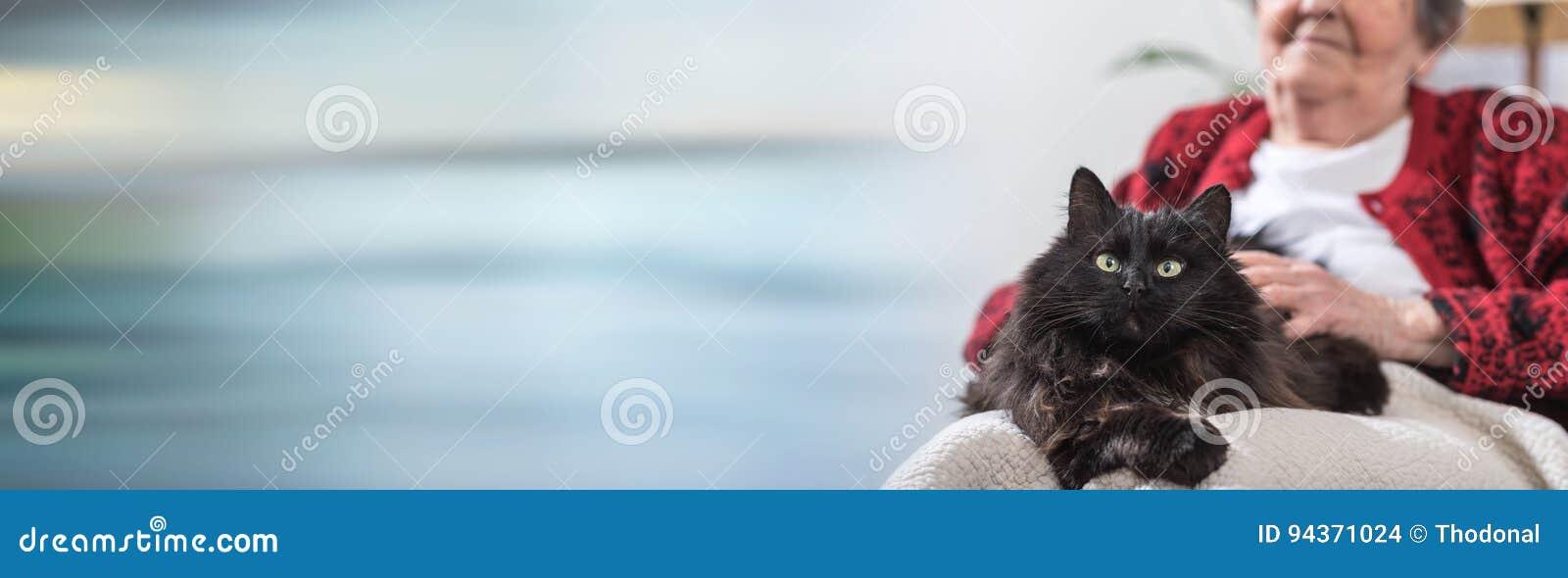 Gammal kvinna med hennes katt