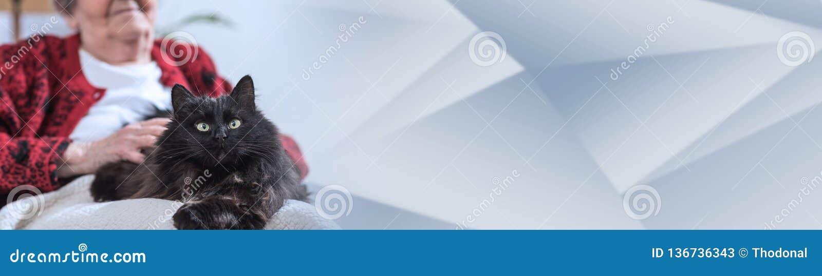 Gammal kvinna med hennes katt panorama- baner
