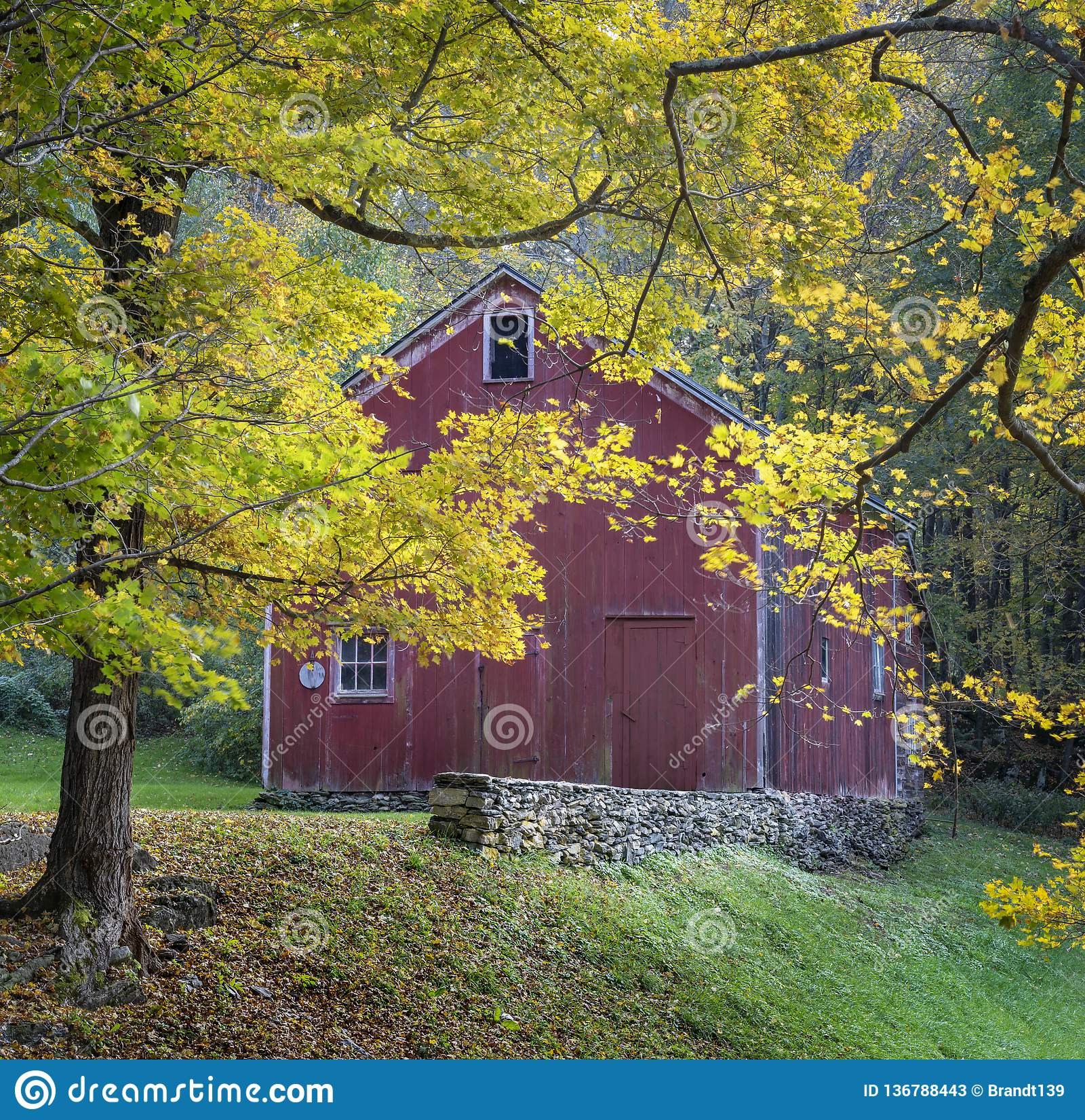 Gammal röd ladugård i Autumn Yellow Foliage