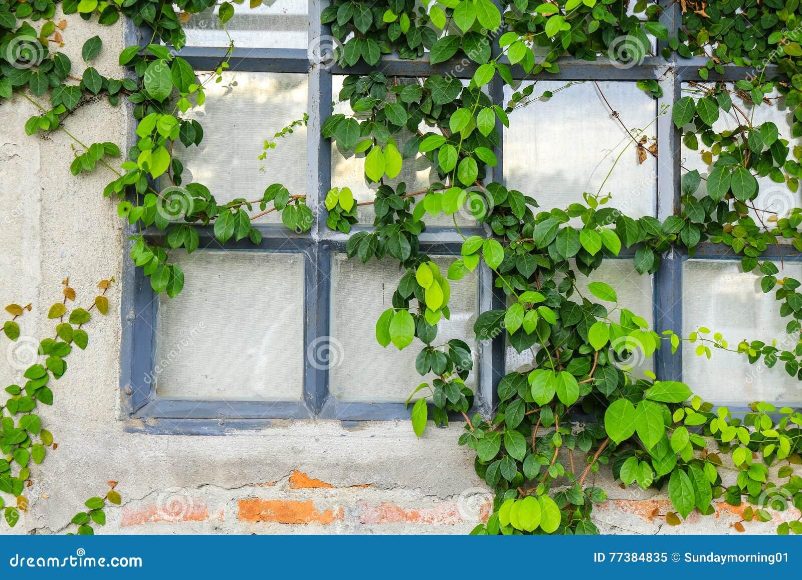 Gammal tegelstenvägg med det glass fönstret