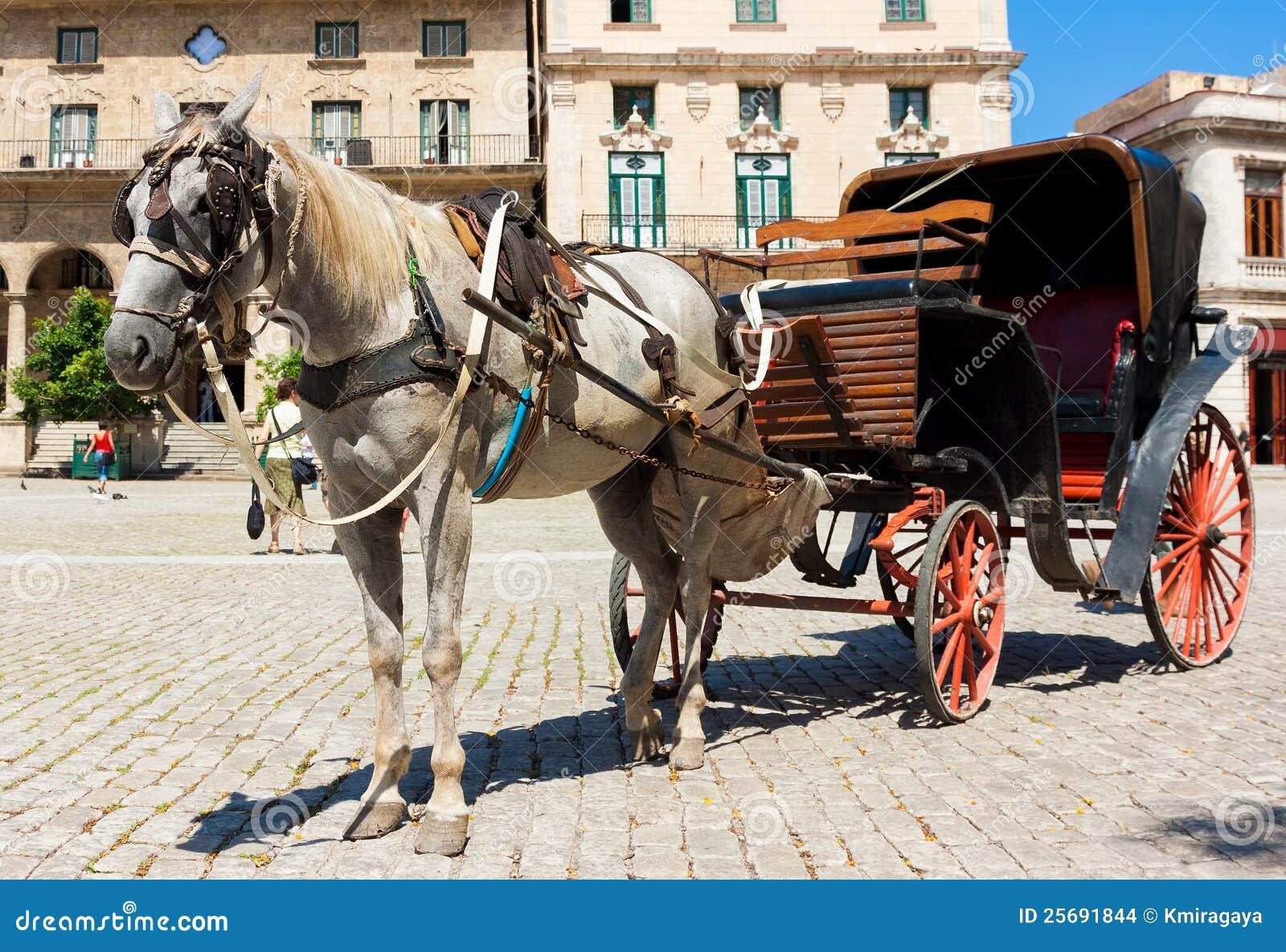 Gammal vagnshavana häst