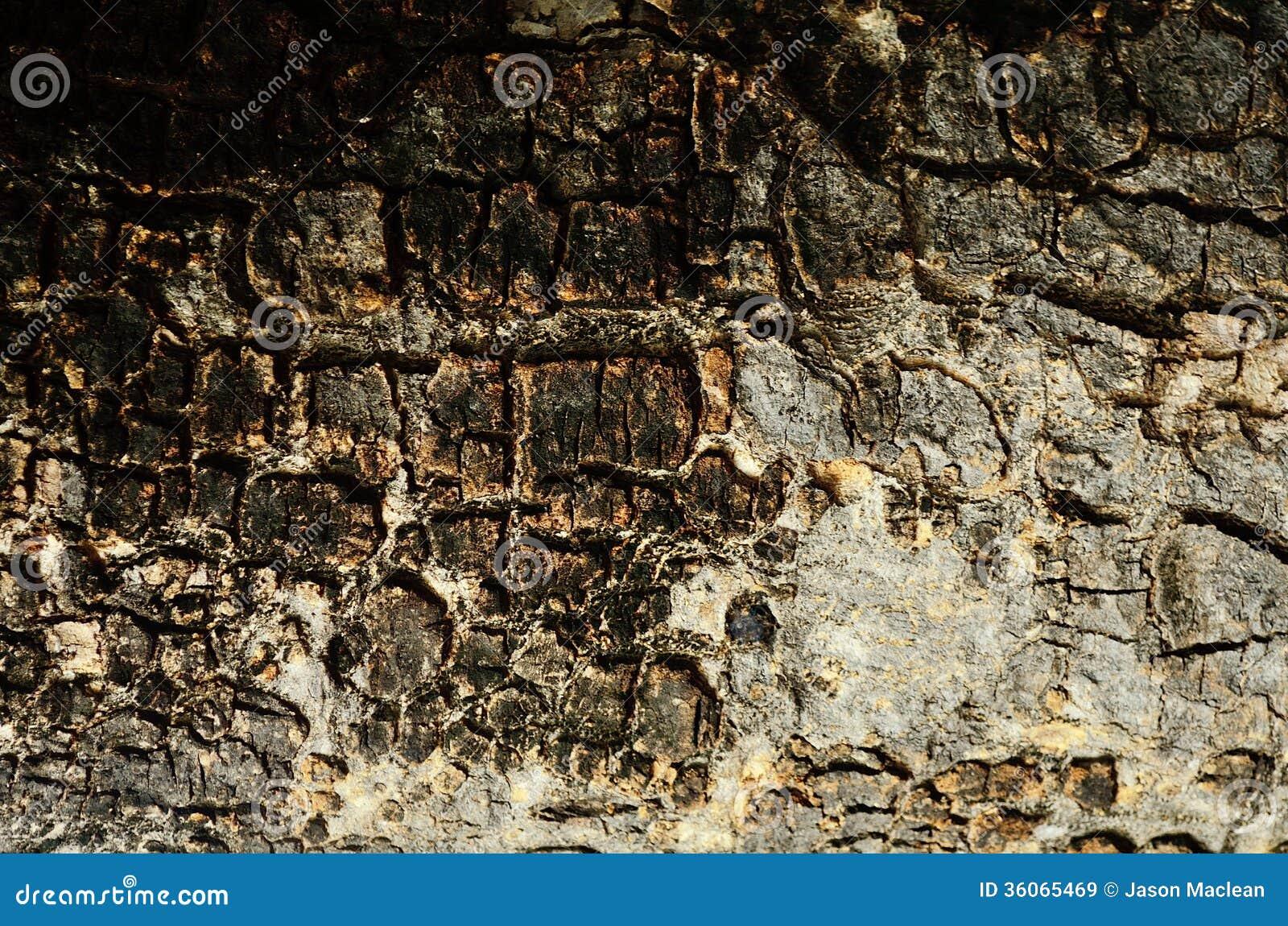 Gammalt åldrigt trä texturerad bakgrund