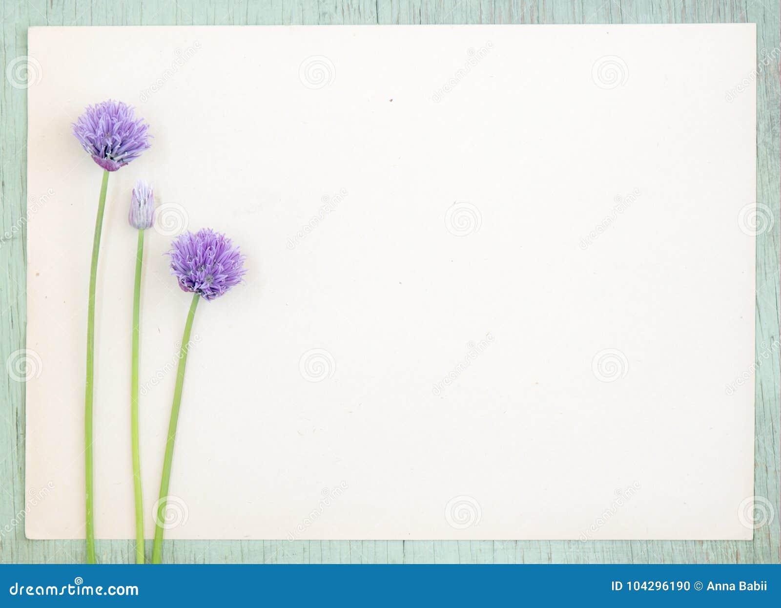 Gammalt kraft papper med den purpurfärgade löken blommar på grungebakgrund