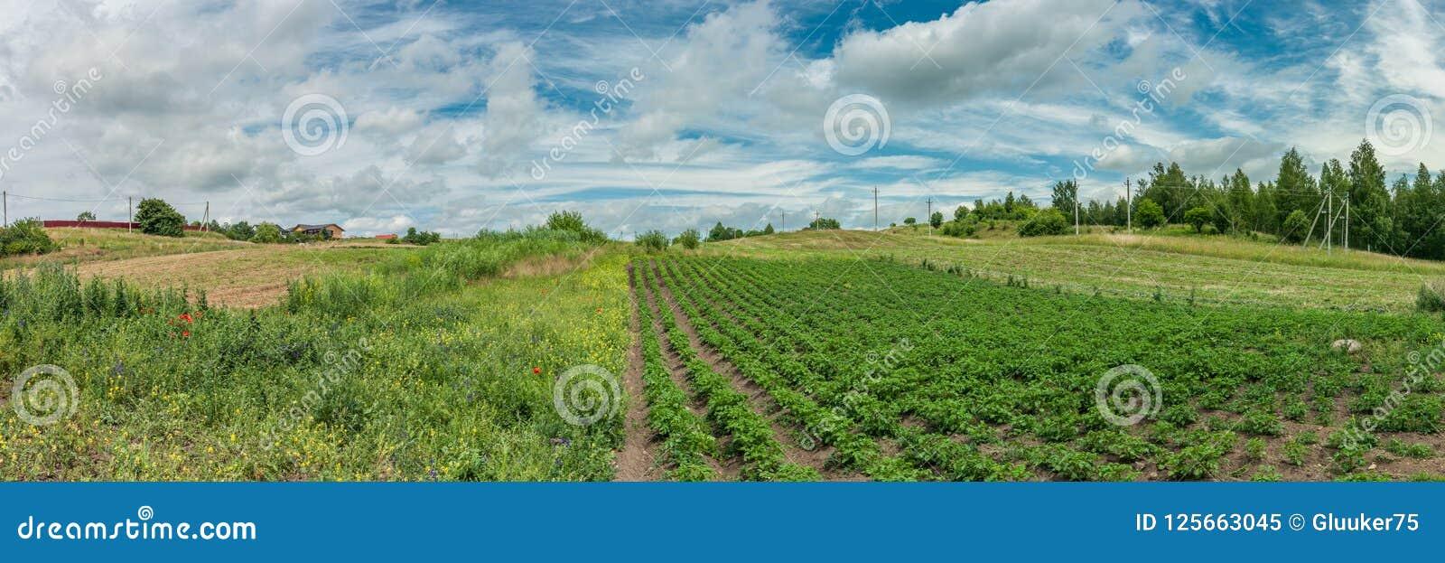 Gammalt lantligt landskap panoramautsikt av privat jordbruksmark