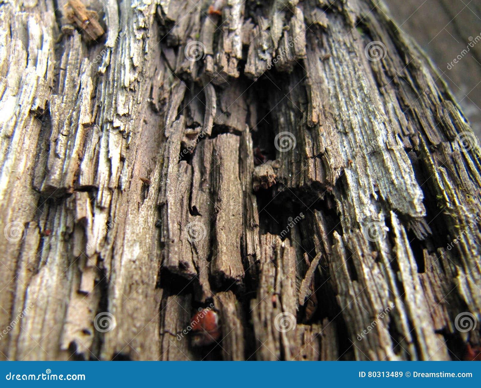 Gammalt ruttet trä