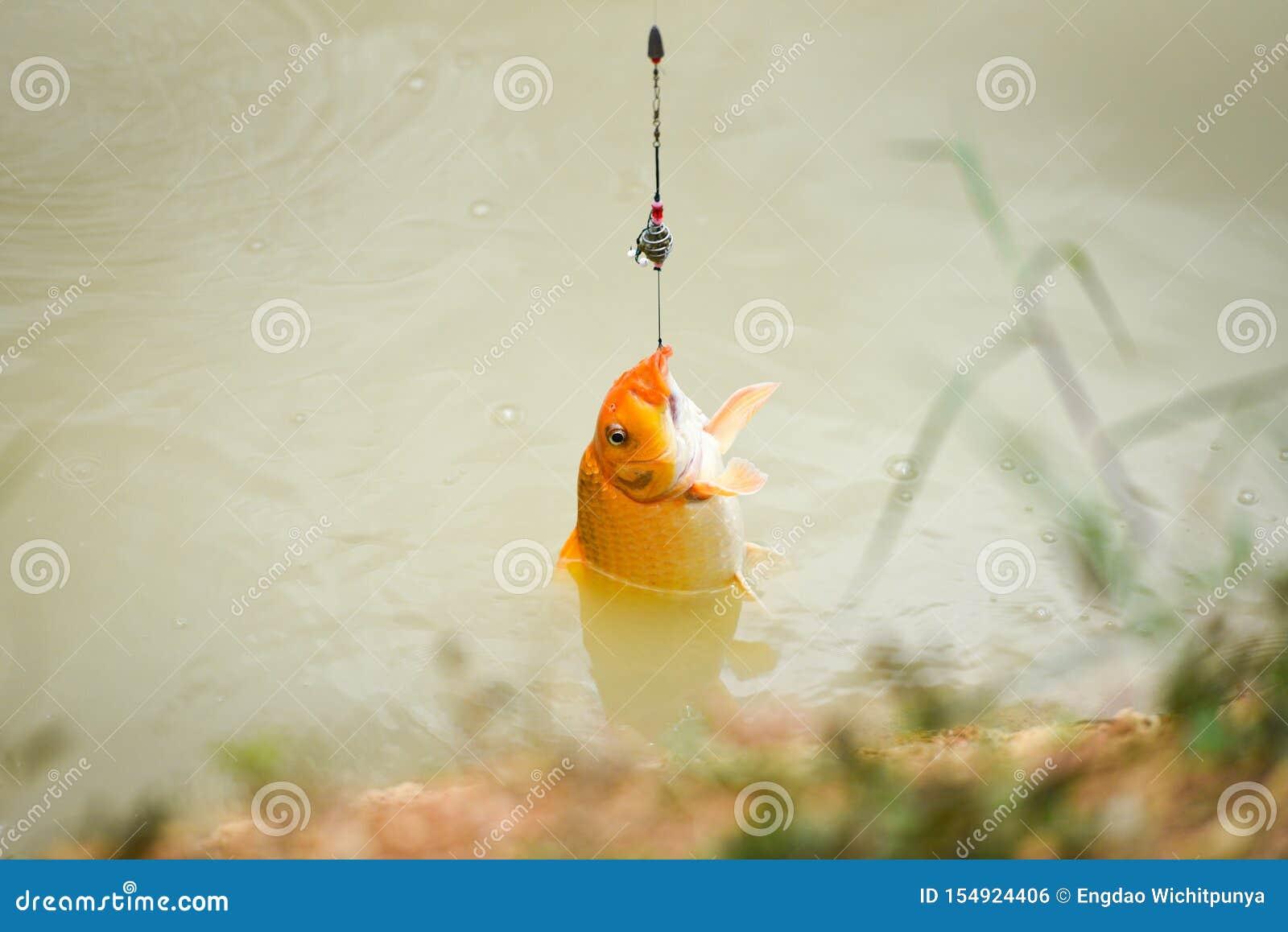 Gancio di pesca sul fiume - pescatore della pesca con la mosca che tira fuori dalla fine del filatore su sparata di un amo subacq