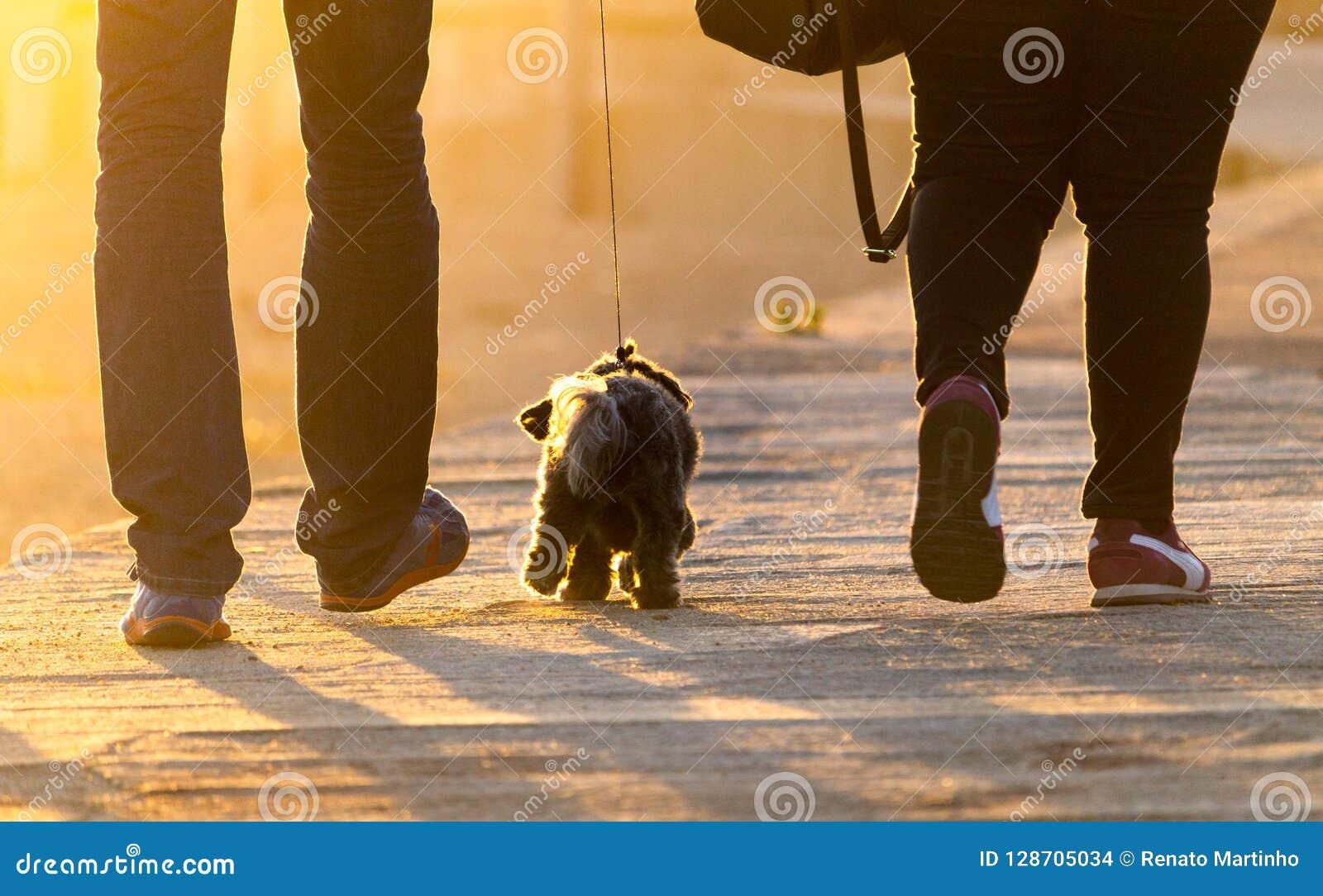 Gangen van Terrier van het het westenhoogland de Bruine tussen Paar