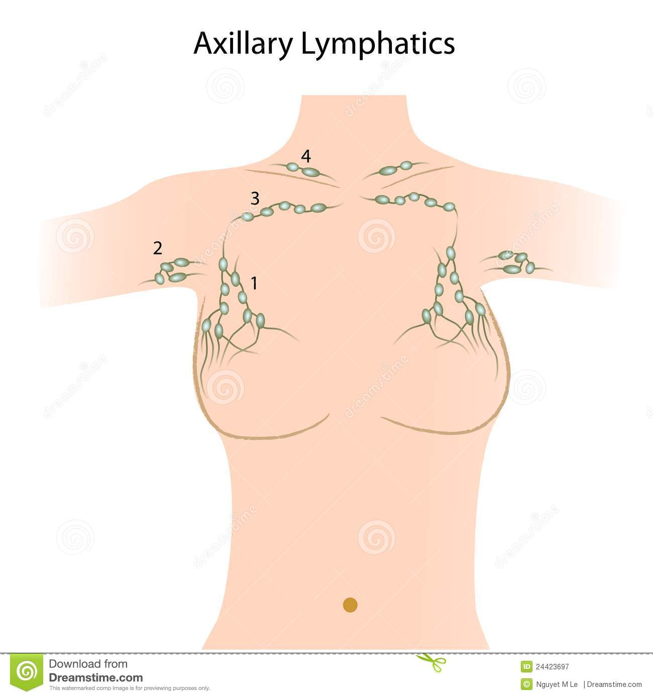 Ganglions lymphatiques axillaires