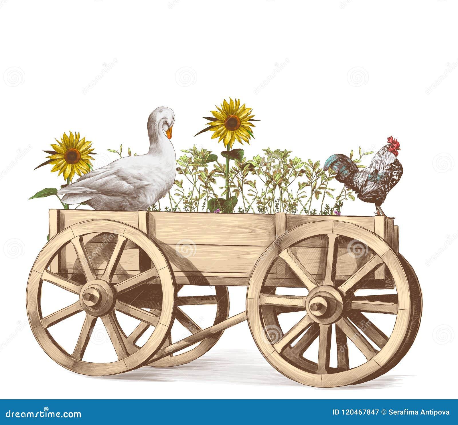 Ganso y gallo que se sientan en un interior de madera del carro que produce la hierba y los girasoles