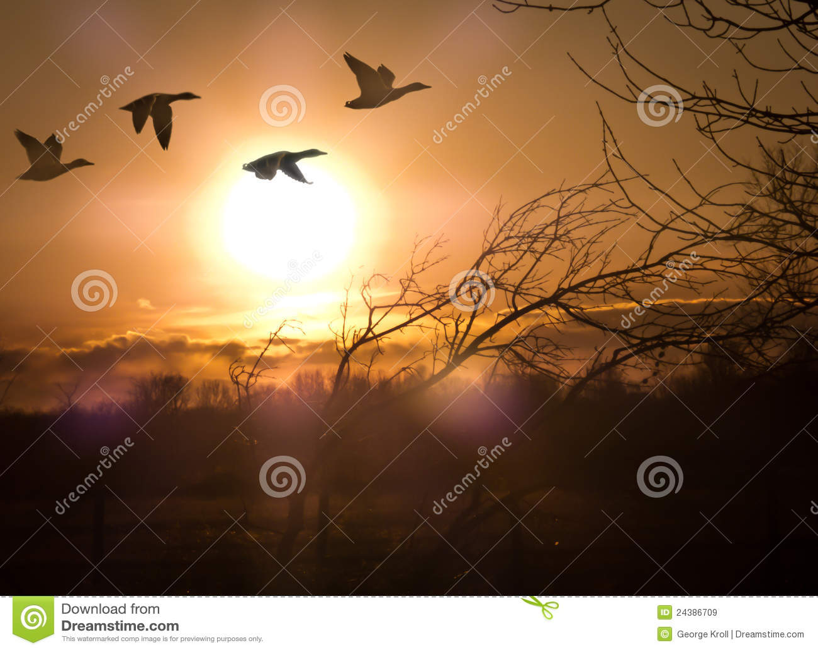 Gansos no por do sol