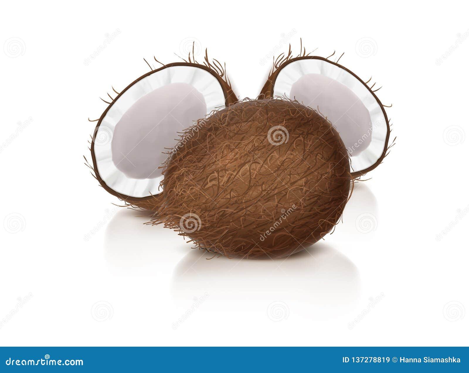 Ganze und halbe defekte Coconuß