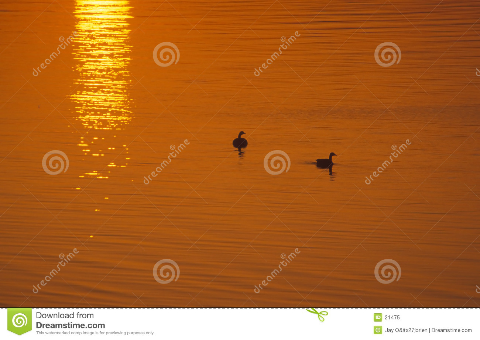 Ganzen bij zonsopgang