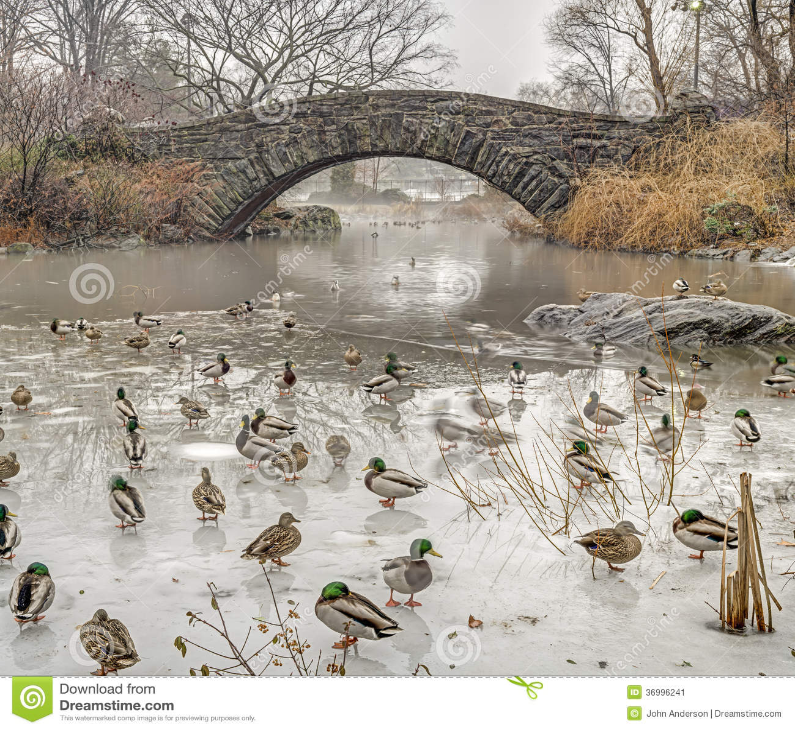 gapstow bridge central park  new york city stock image Cartoon Pond of Water Ducks in a Row Clip Art