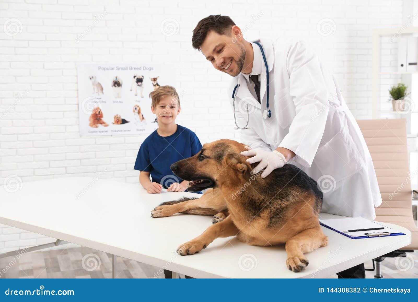 Garçon avec son vétérinaire de visite d animal familier Chien de examen de Doc.
