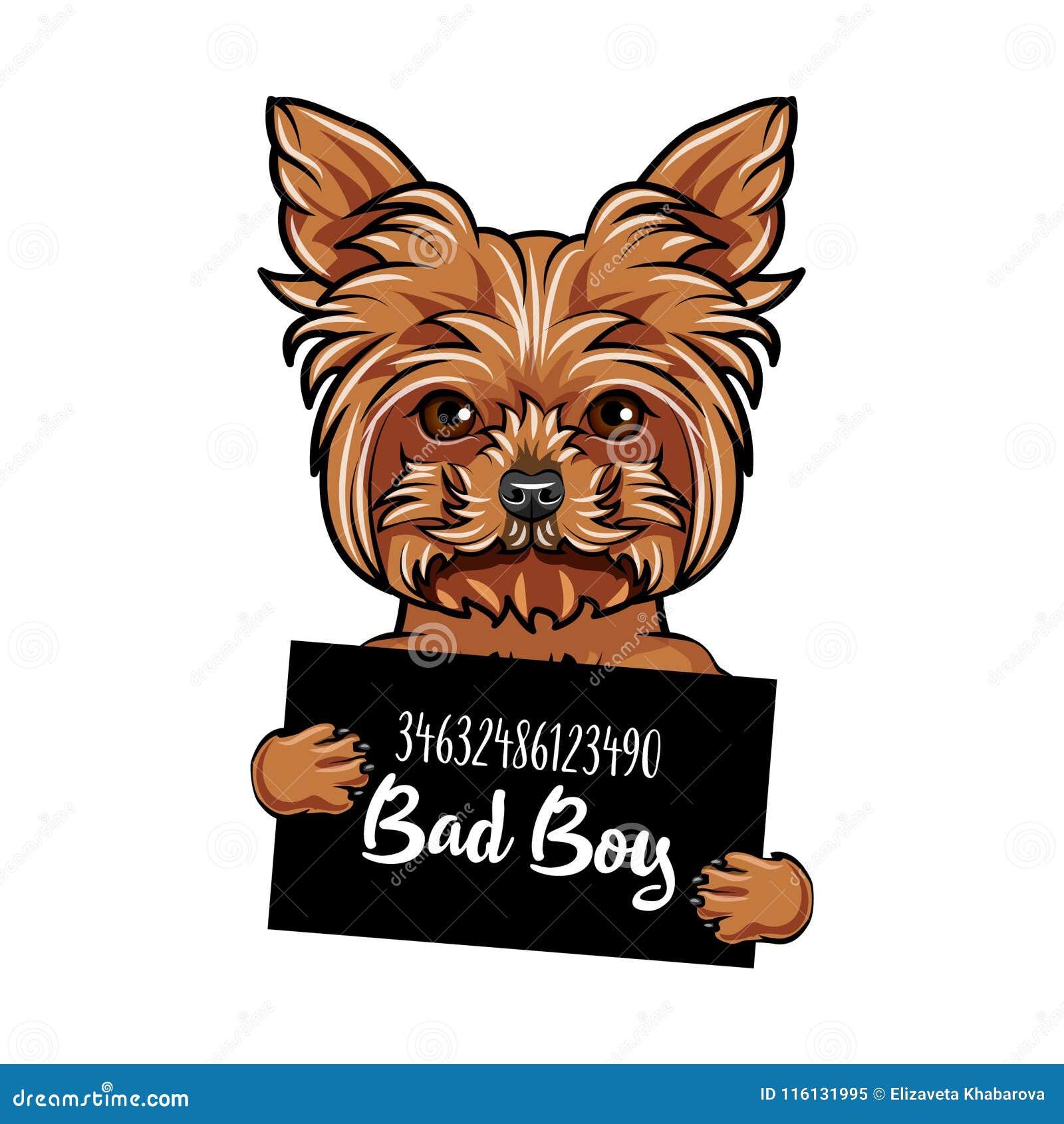 Garcon Du Mauvais De Chien De Yorkshire Terrier Criminel De Chien