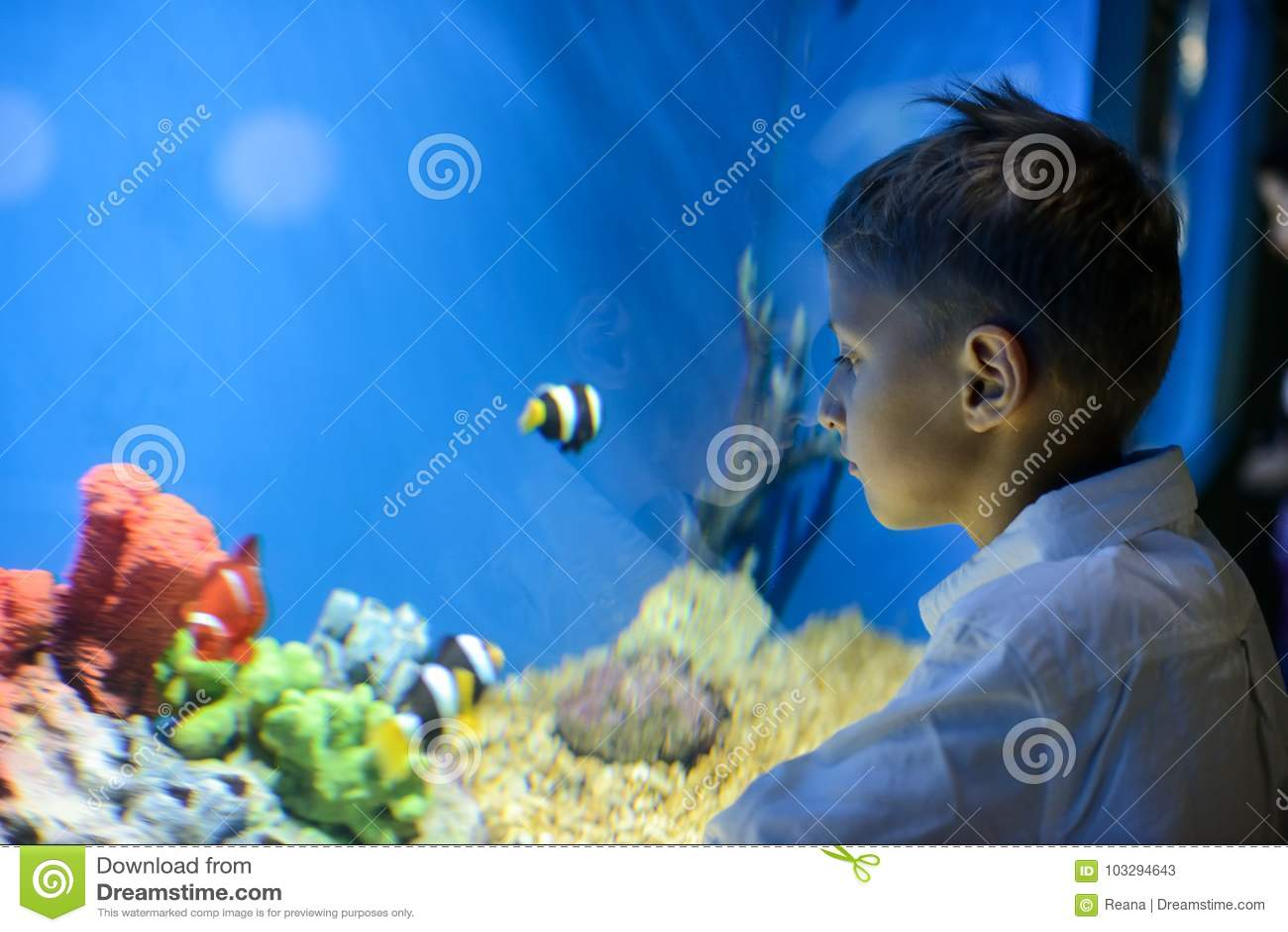 Garçon regardant dans l aquarium