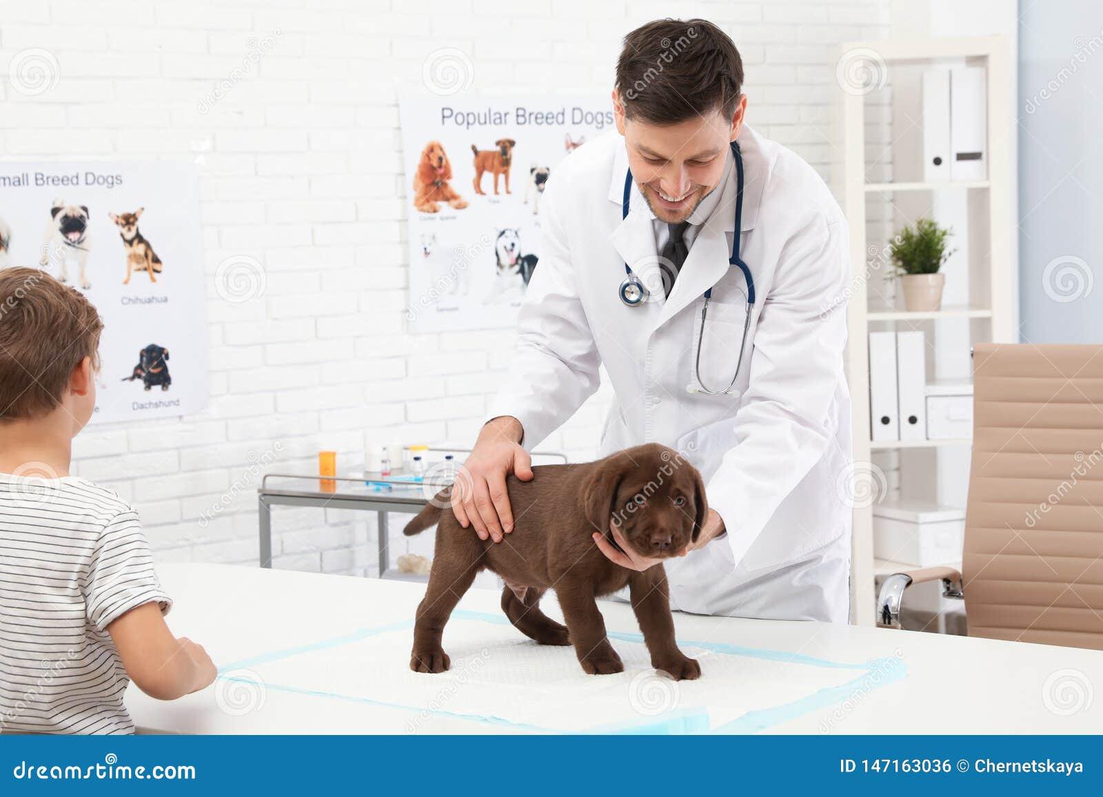 Gar?on avec son v?t?rinaire de visite d animal familier Chiot de examen de Doc.